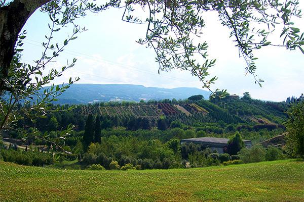 Tra le colline senesi