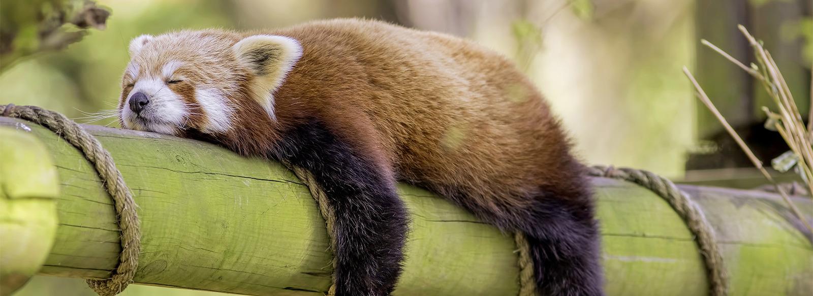 Una giornata tra 1.500 animali di 200 specie: scopri Parco Natura Viva
