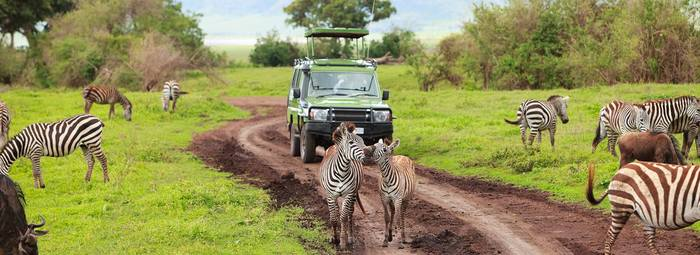 Safari privato in 4x4 in Tanzania, dal parco del Tarangire al Serengeti National Park